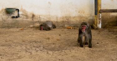 Ζωολογικό Πάρκο του Ιπποκάμηλου