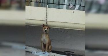 Δεμένος σκύλος από μπαλκόνι