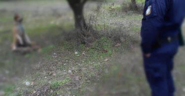Κρέμασαν Σκύλο στη Δυτική Αχαΐα