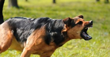 σκύλος σας απειλεί με επίθεση